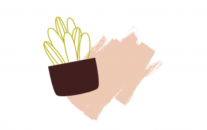 plant on a light peach coloured patch