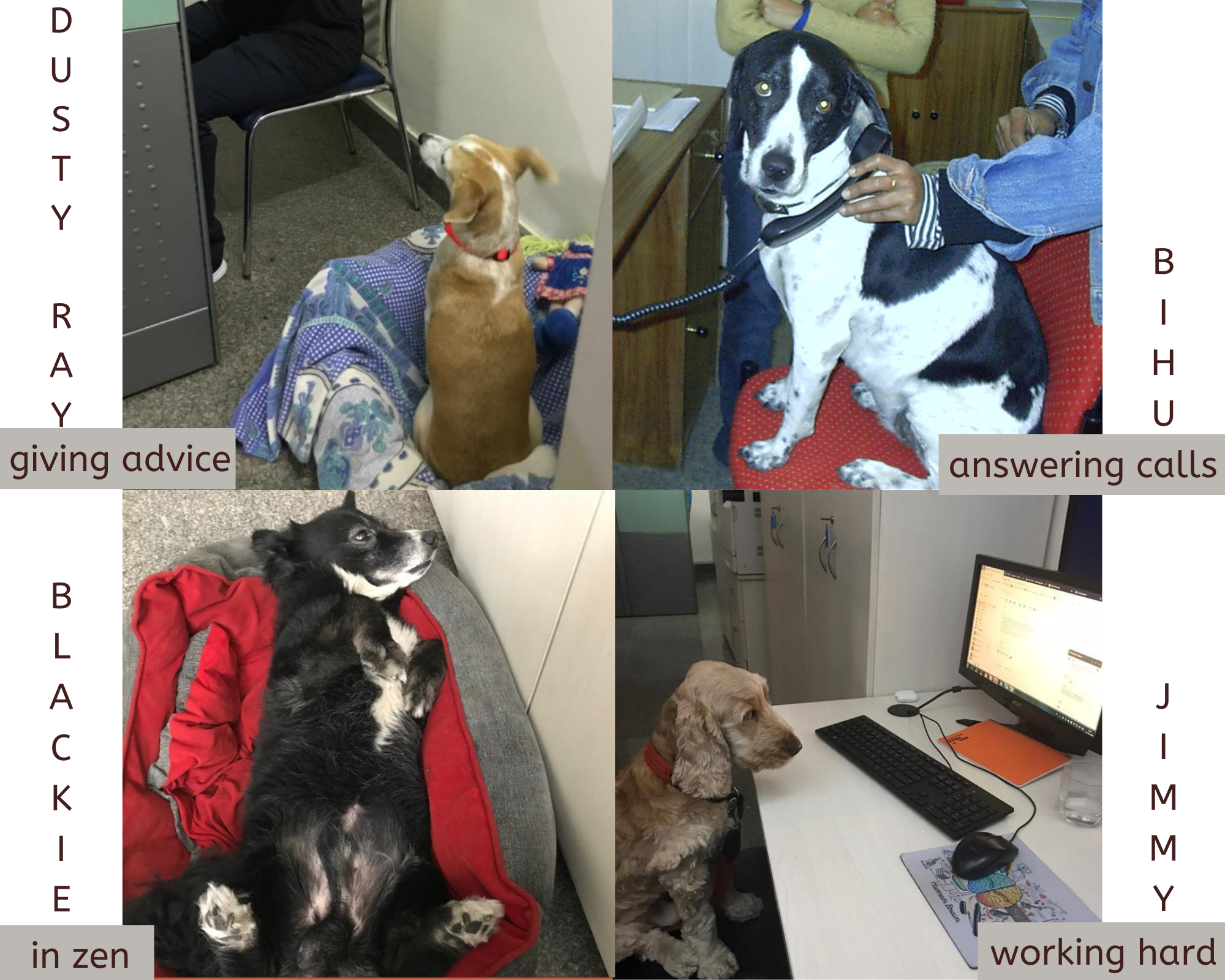 Pet therapy collage
